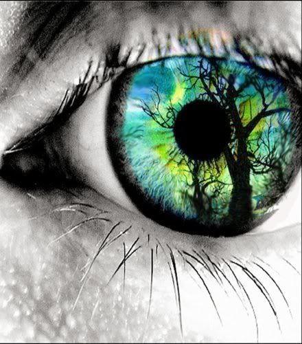 eye-trree